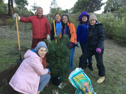 12 - planting tree